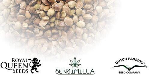 Vi erbjuder just nu ett bonus frö vid köp över 300:- och två vid köp  över 750:- Royal Queen Seeds Critical alternativt Royal Queen Seeds AUTO  Northern light