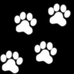 Kattspår Nr1 Flerpack