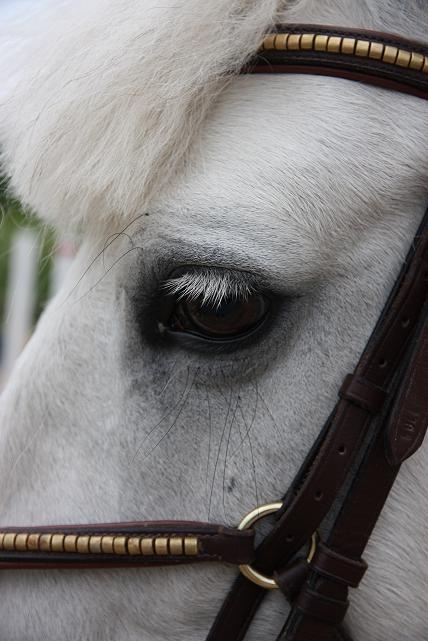 Till Hästen