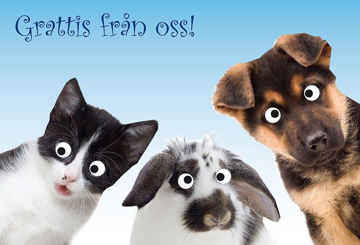Kort Krejsi Ajs Katt Kanin Hund Grattis Från Oss