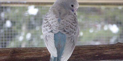 FÅGELBODEN  -Allt för våra burfåglar-