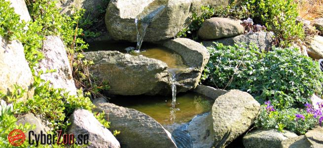 Trädgård trädgård damm : Vattenfall TrädgÃ¥rdsdamm - CyberZoo.se