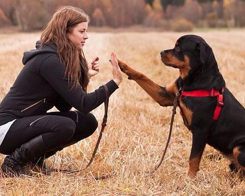 Massor av bilder & recensioner! Träffa våra hundkunder Se alla här!