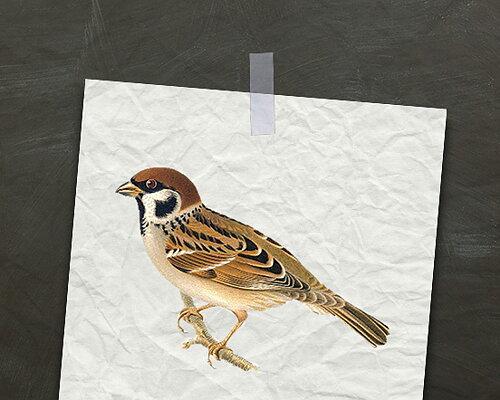 FÅGELSKOLA - fakta om fåglar