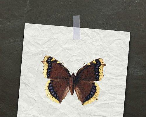 LEVANDE TRÄDGÅRD - om fjärilar, ekorrar, bin & andra djur