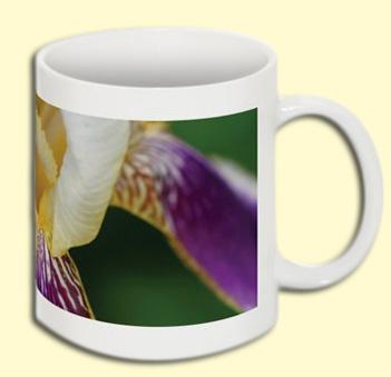 Tiger Irisen