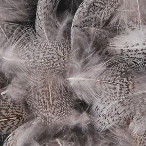 Rapphöna Partridge