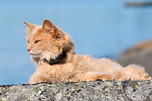 Mini GPS för katt Passar katter från 3kg Till Katt GPS