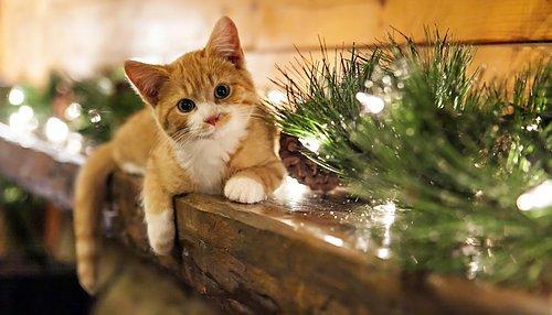 Personlig Service Till Kattshopen Katt tillbehör
