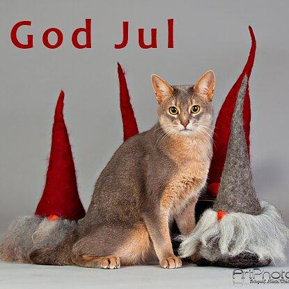 God Jul önskar vi på SmartCat Direkt till vårt Kattsortiment Läs mer