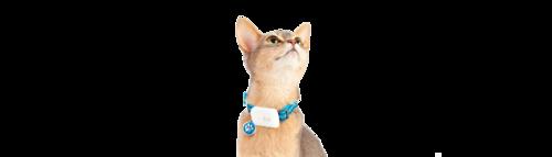 Katt GPS Läs mer om vår Katt-GPS Besök sidan här