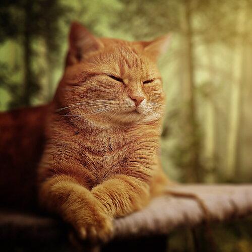 Stort sortiment för katt Katthalsband, kattsele, kattbäddar m.m. Läs mer