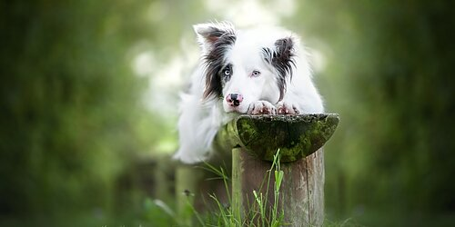 Bästa supporten! Till Hundshopen Hund tillbehör