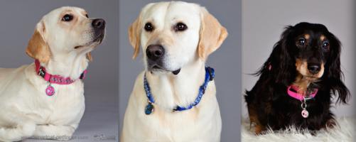 ID-bricka till Hund - Kvalitetsgaranti!