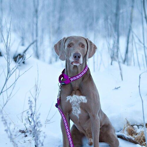 Hundkoppel stark reflex Lila Justerbart koppel med mjukt vadderat handtag Läs mer