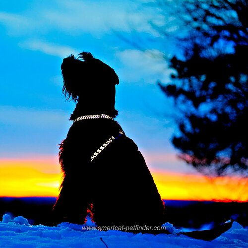Reflex Sele Från Red Dingo Lyser perfekt i mörkret! Läs mer