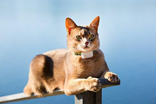 Pejlutrustning för katt Väger endast 4gram! Till Pejlare S350