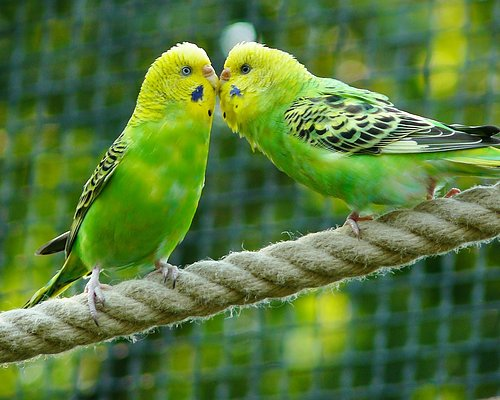 Allt till din fågel Fågelmat, godis, leksaker m.m. Läs mer