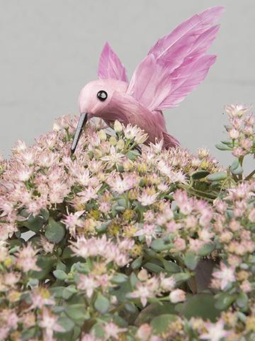 Fågel rosa vit lila Kolibri dekoration shabby chic lantlig stil