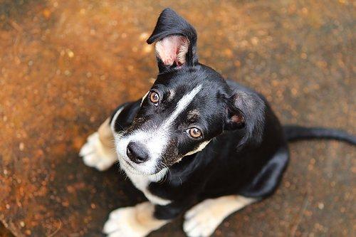 Grundkurs/valpkurs  En rolig kurs där vi lägger vikten vid förebyggande träning och att lära hunden att tycka om att följa och vara med oss. Du lär dig grunderna i att jobba med klickerträning.