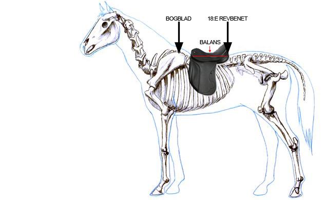 sadelunderlägg som skyddar hästens rygg