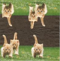 Kattungar på språng
