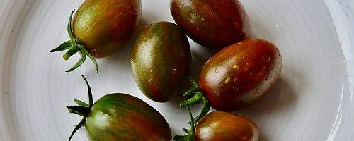Dags att så tomater Vi har massor av spännande sorter