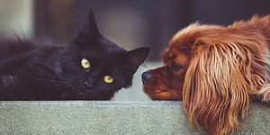 Husdjursprodukter  Petcom, m.m.