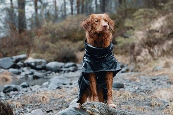 Hurtta Monsoon Regntäcke - Björnbär