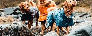 Hundkläder  För alla väder