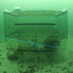 Cod Trap, Medium, Two Entrances