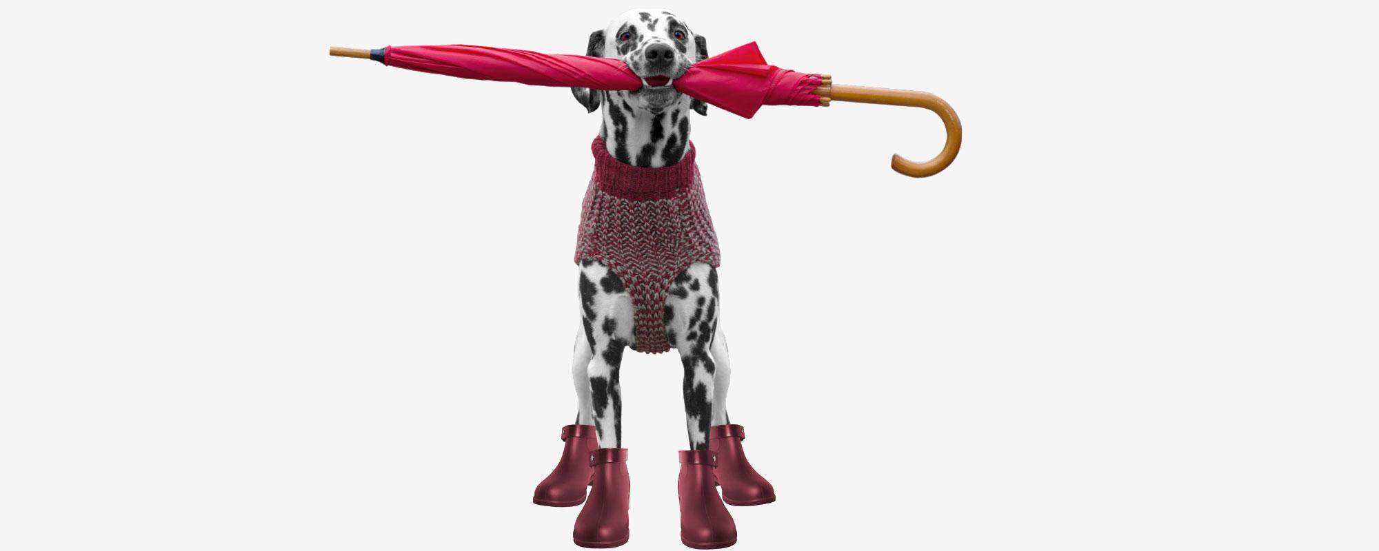 Hundskor & Strumpor | Skydda Hundens Tassar | Köp Online