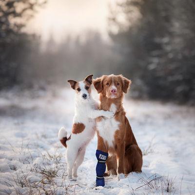 Medical Pet Shirt hundsko M kort gul /st