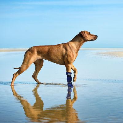 Medical Pet Shirt hundsko XL grå /st