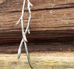 Halsband silverkvist