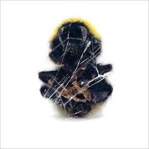 Deadbeat-Walls and Dimensions /  Blkrtz