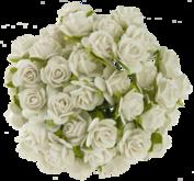 10 st rosor -ivory- 15 mm