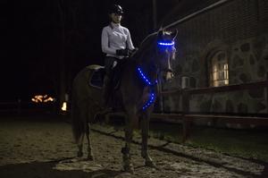 LED Pannband/nosband