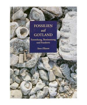 Fossilien auf Gotland