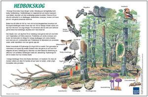 Hedboksskog
