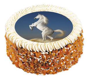 Häst 6