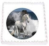 Häst 7