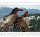 Häst 9