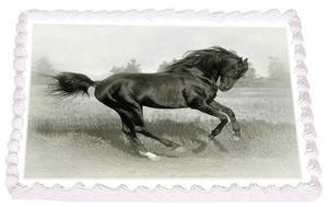 Häst 10
