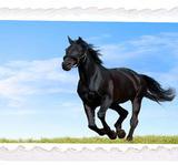 Häst 12