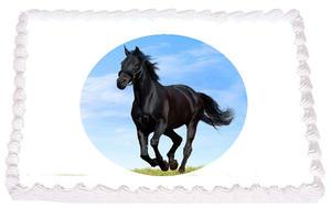 Häst 15