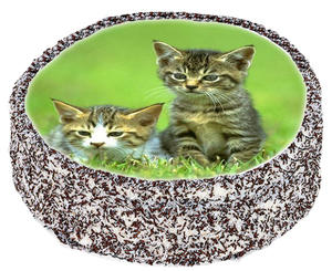 Katt  3