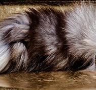 Fox Tail Black/White, Ruber Plug