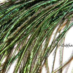 Påfågels-fjädrar /Peacock Feathers: Stripes