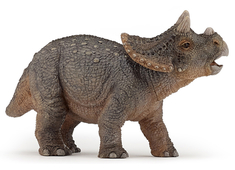 Triceratops Young